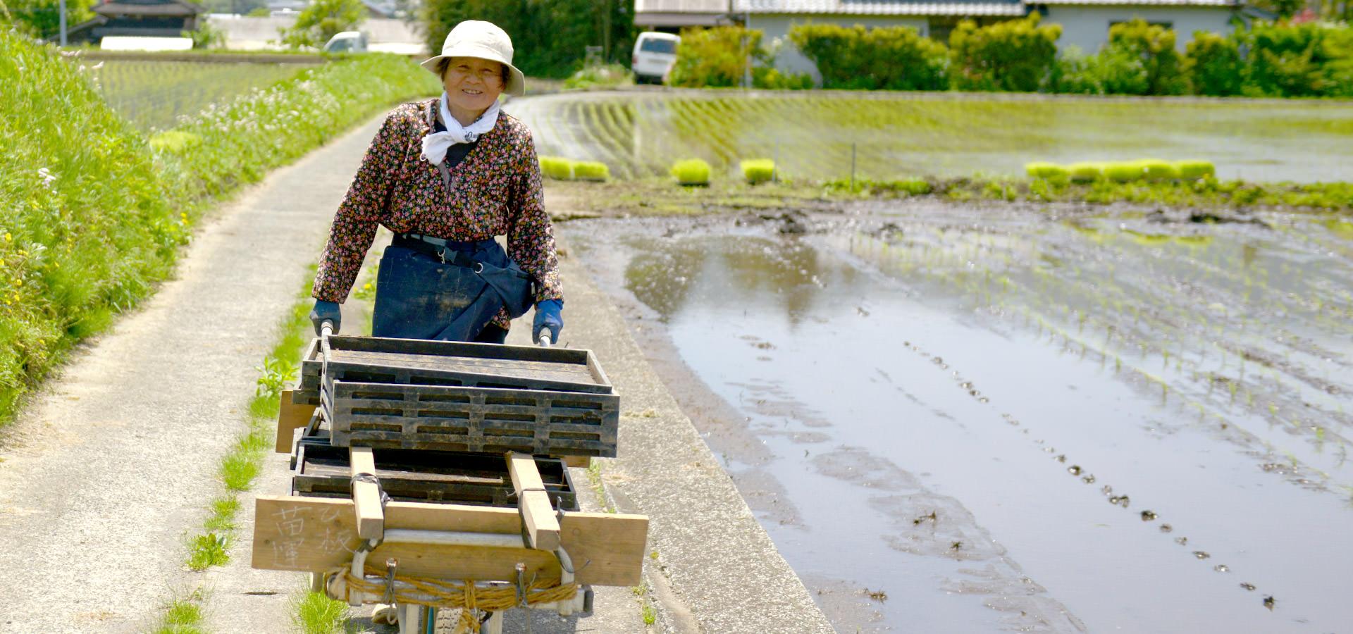 田尻カツ子さんのお米