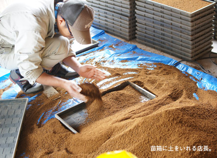 苗箱に土をいれる店長。