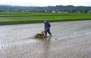 雨のなか除草機をかける店長。