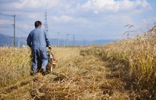 バインダーで稲を刈るただちゃん。