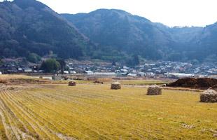 稲刈りの終わった後藤さんの田んぼ。