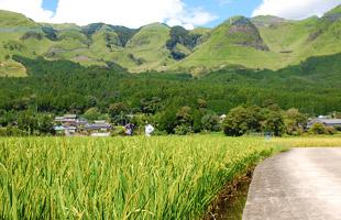 阿蘇外輪山すぐそばにある水田。