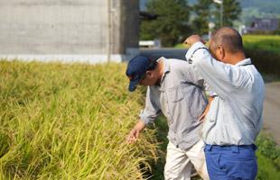 稲の育ち具合を話す井芹さんと北野さん。
