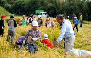 小学生に稲の刈り方を指導する北野さん。