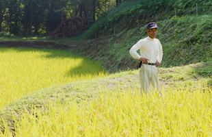 収穫前の田んぼを見つめる北野鉄矢さん。