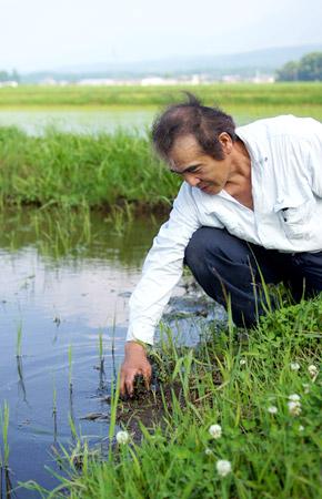 稲の成長具合を確認する西田さん。