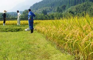 稲刈り前の田んぼで話す、緒方夫妻と北野鉄矢さん。