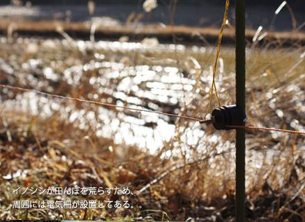 イノシシ対策のため田んぼに設置してある電気柵。