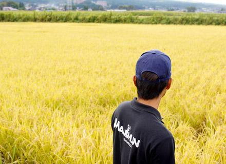 稲刈り前の田んぼを見つめる下村さん。