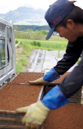 苗箱を軽トラックに積み込む下村さん。