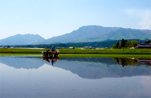 阿蘇山を間近に望む水田で田植えを行う。