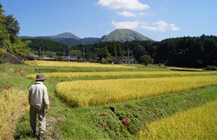 田んぼを見まわる高島さん。遠くには阿蘇山が見える。
