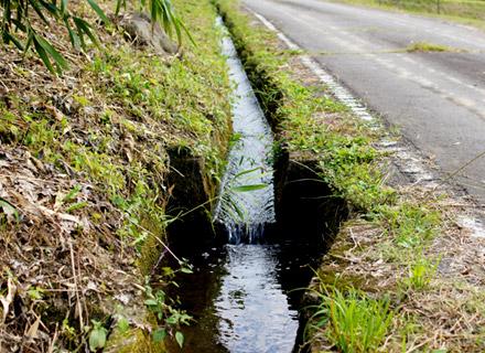 用水路を流れる湧き水。