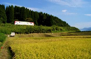 田んぼ横を通り過ぎる列車。