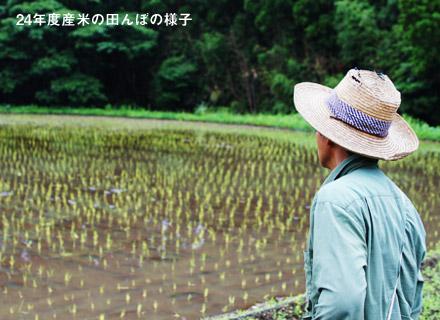 今年の田んぼを見つめる宇都宮さん。