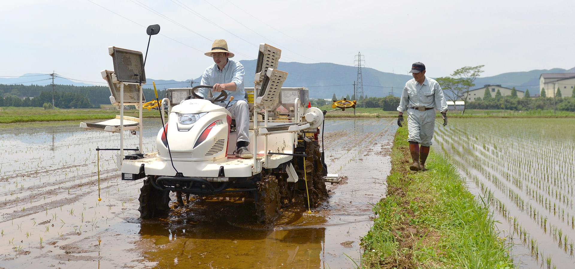 五嶋義行さんが作る、無農薬・無施肥栽培米。
