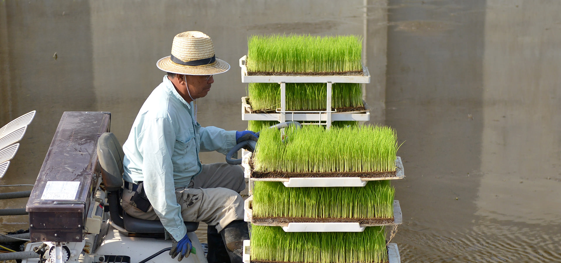 井芹政重さんが作る、無農薬・無施肥栽培米。