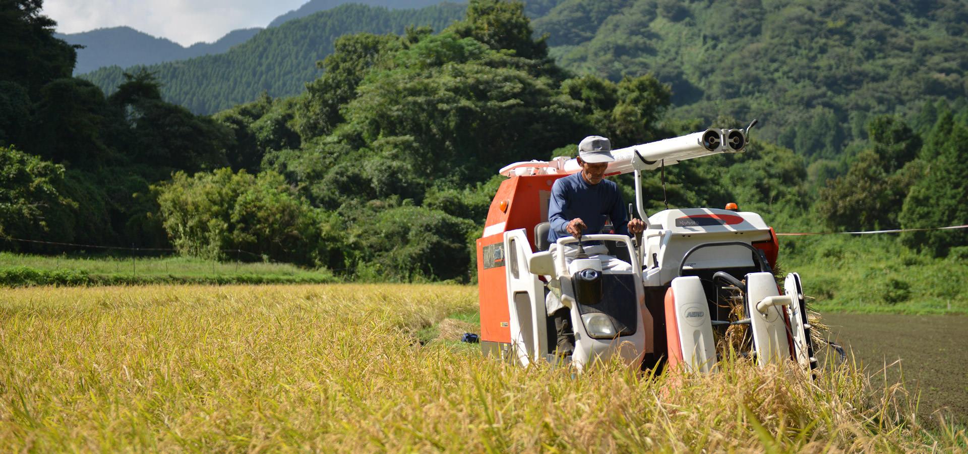 北野鉄矢さんが作る、無農薬・無施肥栽培のコシヒカリ。