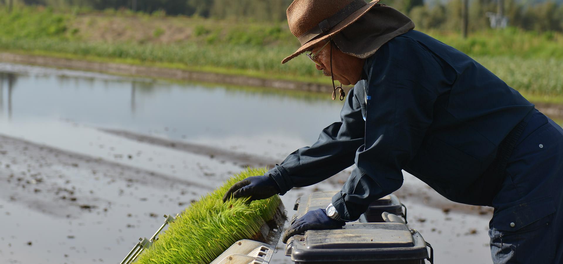 長野訓之さんが作る、無農薬・無化学肥料栽培のコシヒカリ。