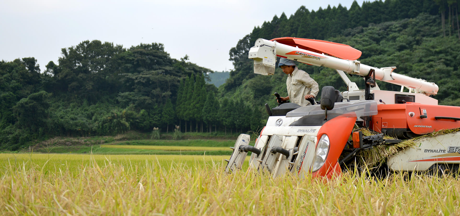 高島和子さんが作る、無農薬・無施肥栽培米。