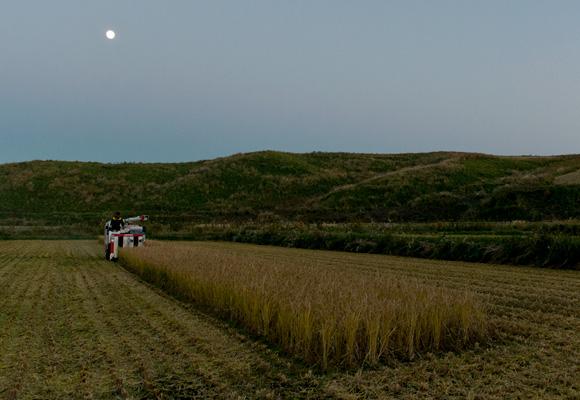 10時から始めたヒノヒカリお稲刈りは夜7時過ぎにようやく終了。終わる頃には日はすっかり落ちてコンバインのヘッドライトを頼りに稲刈りする羽目に。なお、当日は171年に一度の「ミラクルムーン」で、お月様がとっても綺麗でした。