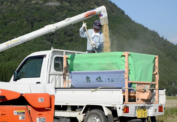 刈り取った籾は運搬車で笠野さんのライスセンターに運ぶ。種もみを自家採種する場合はこの時点で確保しておく。その後天日干しして保管。