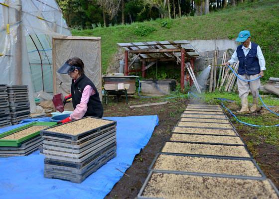 苗箱に水を撒く藤原さんと種籾をまく奥さん。お二人の息の合ったコンビネーションで種まきは進んでいく。