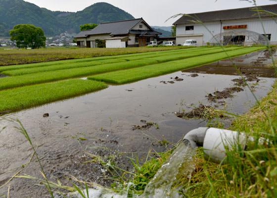 育山麓から流れてくる水は県外からも水を汲みに来る人も多い「手野の名水」。新鮮な天然水を惜しげもなく育苗に使用している。