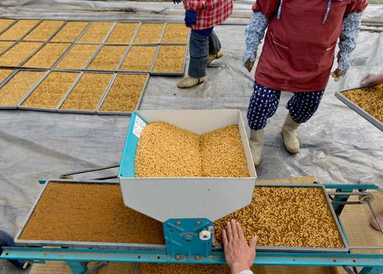 北野さんの使っている種まき機。上から種籾を入れてハンドルをぐるぐると回すと、苗箱の上に一定量の種籾がまばらに落ちてくる。きれいにまくにはハンドルの速度と種籾の乾燥具合が重要。