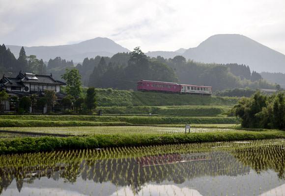 写真を撮っていたらナイスタイミングでかわいいピンクの電車が。田んぼは下から順に北野悦之さんの山田錦、松子さんの山田錦、松子さんのヒノヒカリ。もちろんすべて無農薬栽培米の田んぼである。