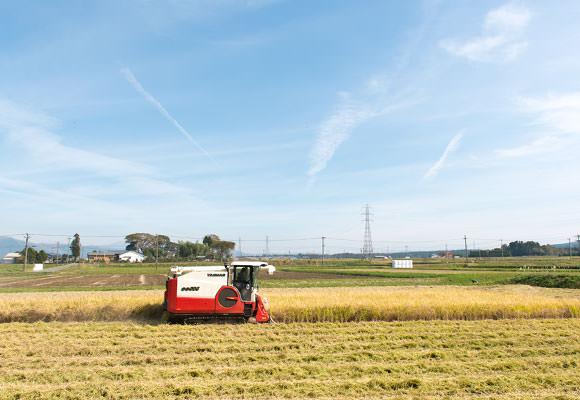 基盤整備してある四角い田んぼに5条刈りのコンバインの組み合わせだと、稲刈りはあっという間に終わってしまう。全部終わる前に写真が撮れてよかった。