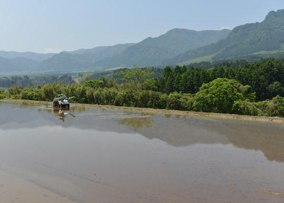 阿蘇外輪山の麓にある北野さんの田んぼ。耳をすませば白川の流れが聞こえてくる。