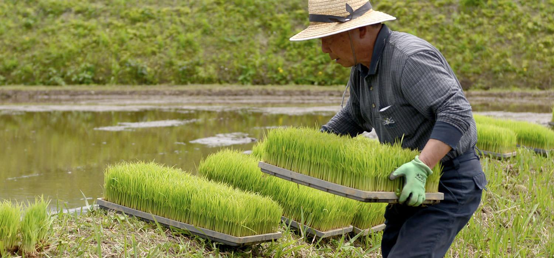 工藤さんの無農薬栽培米の田植え。
