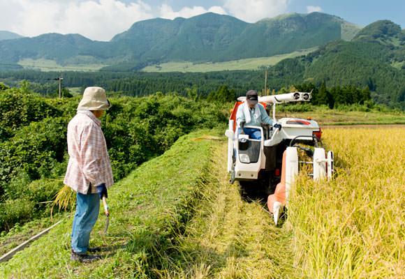 長野さんがコンバインに乗っている間、奥さんは田んぼに入って刈り残った稲を一本一本集める作業。「ここまで除草を頑張ったんだから一本すら捨てるのはもったいなかです」と奥さん。