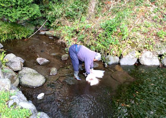 湧き水に籾を浸す長野さん。この湧き水は長野さんの田んぼの農業用水としても使用されるのだ。