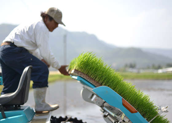 除草剤を使わない米の無農薬栽培に欠かせない技術である成苗植え。西田さんは籾の薄まきにより成苗の栽培を行っている。