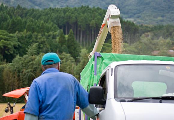 収穫した籾は軽トラに載せてすぐにライスセンターに運んで乾燥を始める。喜多ライスセンターには無農薬栽培米専用の乾燥機があるので慣行栽培のお米と混ざる心配はない。