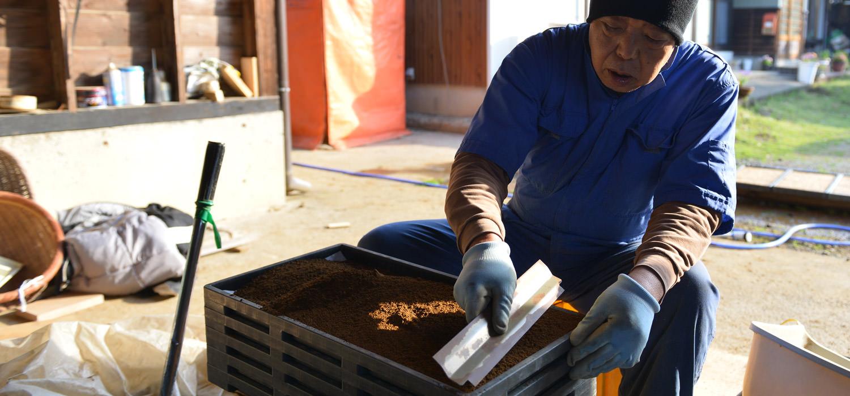 緒方さんの自然栽培米の種まき。