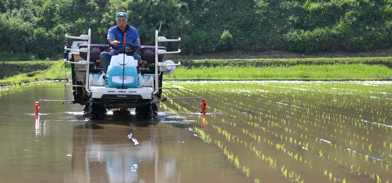 緒方さんの自然栽培米の田植え。