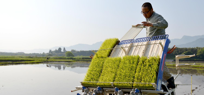 大森さんの自然栽培米の田植え。