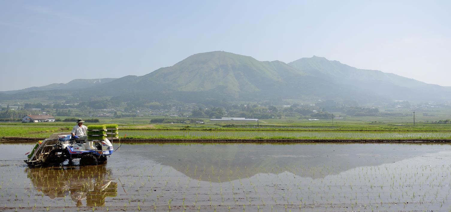 栃原さんの無農薬栽培米の田植え。