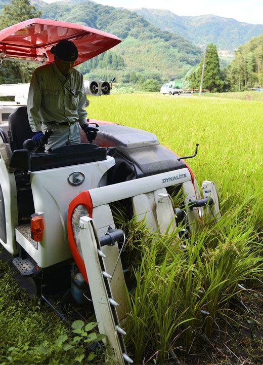 コンバインで稲を刈る浩二さん。狭い場所は立って刈り具合をチェックしながら操作する。