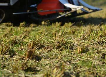 田植え後の稲株。冬は耕起などはしないので、この稲株は来年春までこのままの状態で残る。