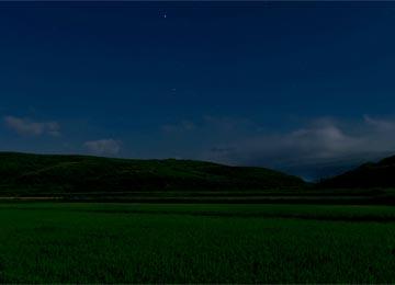 夜中3時の田んぼ。星空と田の写真が撮りたかったので夜中に起きて田んぼに行ったのである。除草は頑張らないのに、こんなところで頑張る店長であった。