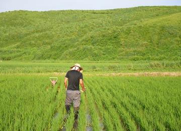 除草作業中、携帯電話を田んぼに落としてうろたえる店長。水没した状態で発見された携帯電話は、乾燥したら3日後に復活した。