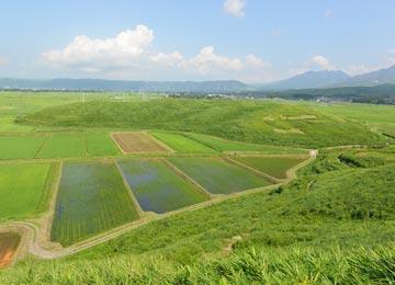 小高い丘に挟まれた田んぼ。計5枚、総面積1haと10aの田で米作りを行う。広い、広いねぇ〜。
