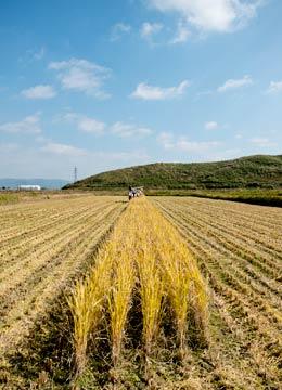 稲刈り中の田んぼ。残すところあと5列。うーん、我ながらなんていい写真を撮るんだろう。