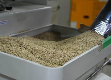 籾摺り前の籾。選別機を通していないので、雑草の実やら石やらいろいろ混じっている。