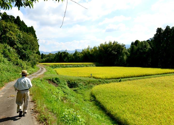 田んぼへ向かう藤原さん。正方形の田が棚田状に並ぶ。