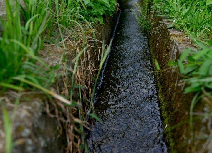 藤原さんは田んぼを数枚持つが、いずれの田も使用する用水は新鮮な阿蘇の湧き水だ。